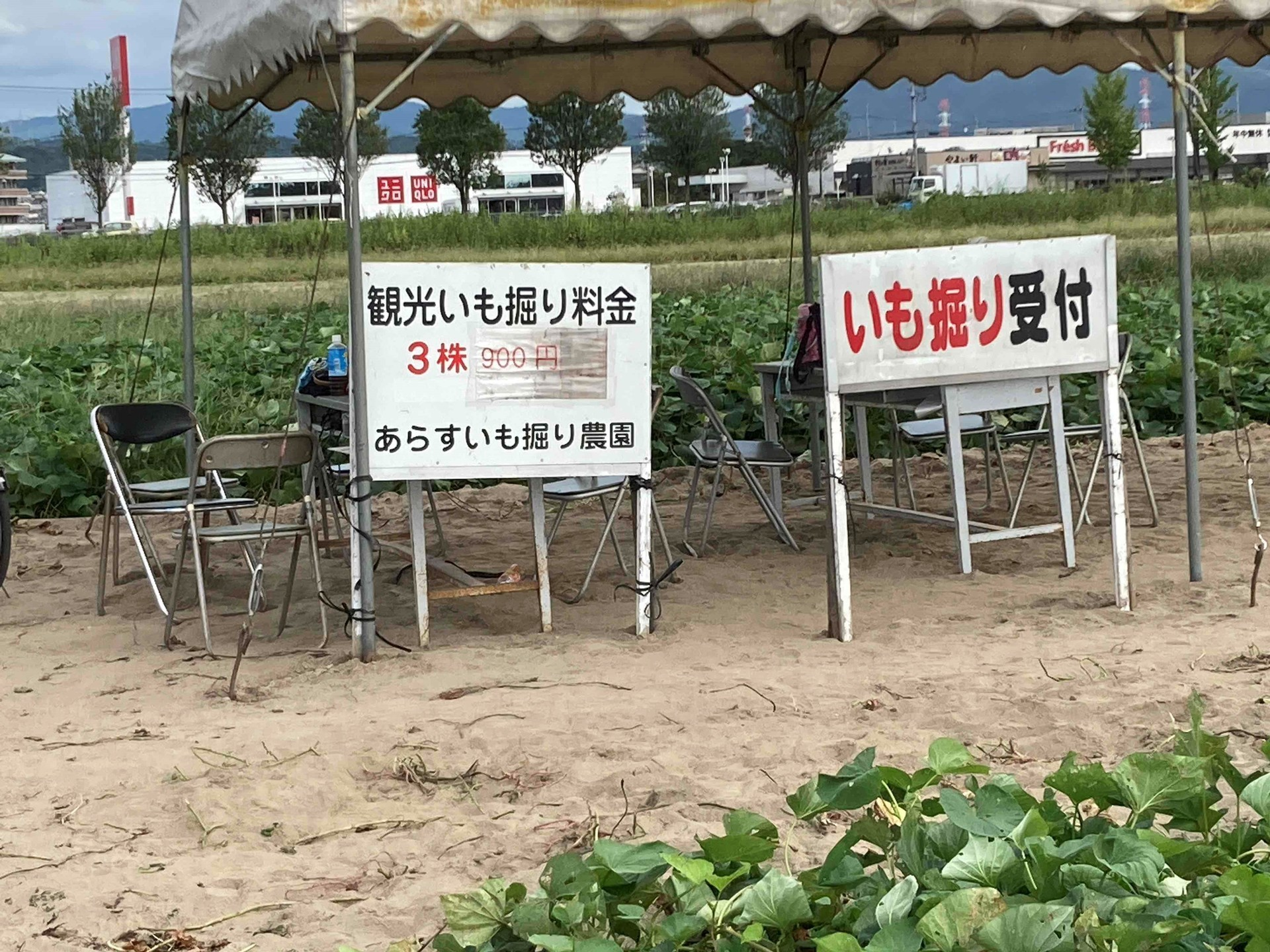 あらす観光いも掘り農園