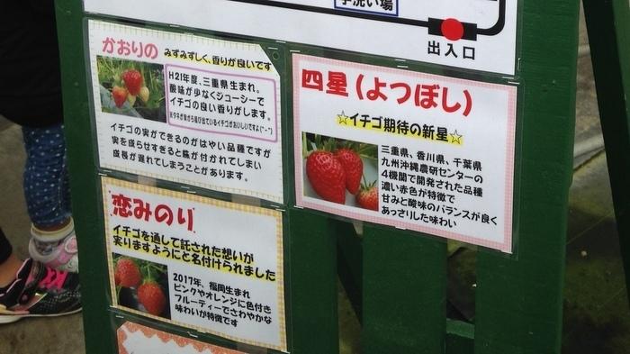 いちごの種類