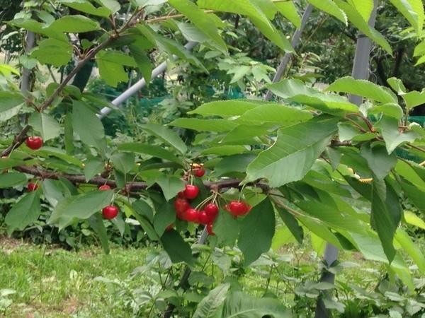 小野洋蘭果樹園