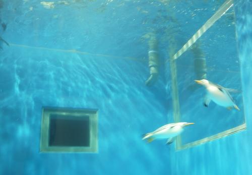 越前松島水族館 ペンギンエリア