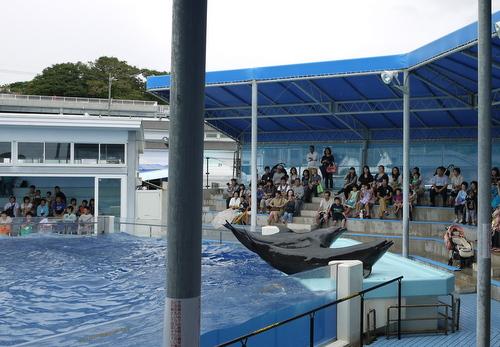 越前松島水族館 イルカのショー